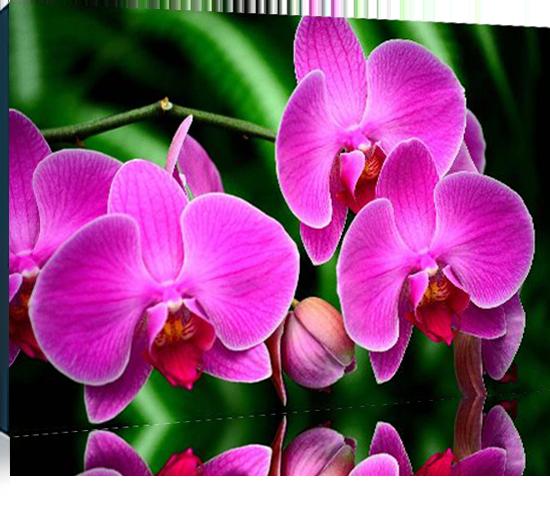 Архидивные Орхидеи