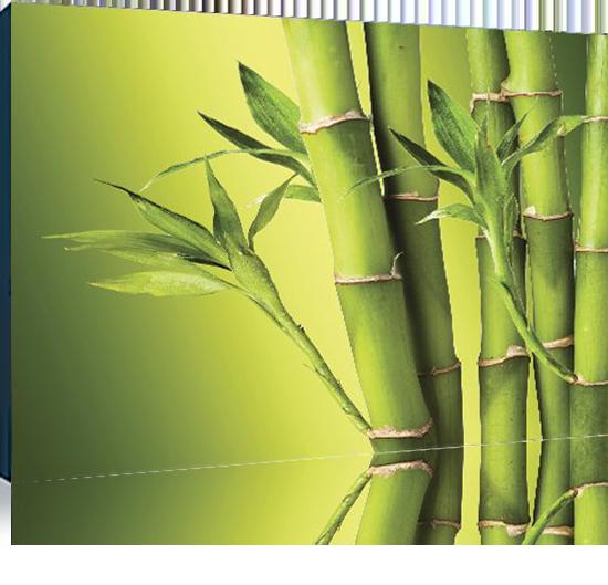 Бамбук И Растения